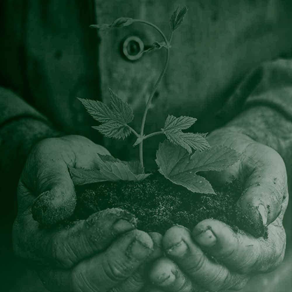 Planting London | Treewise Men