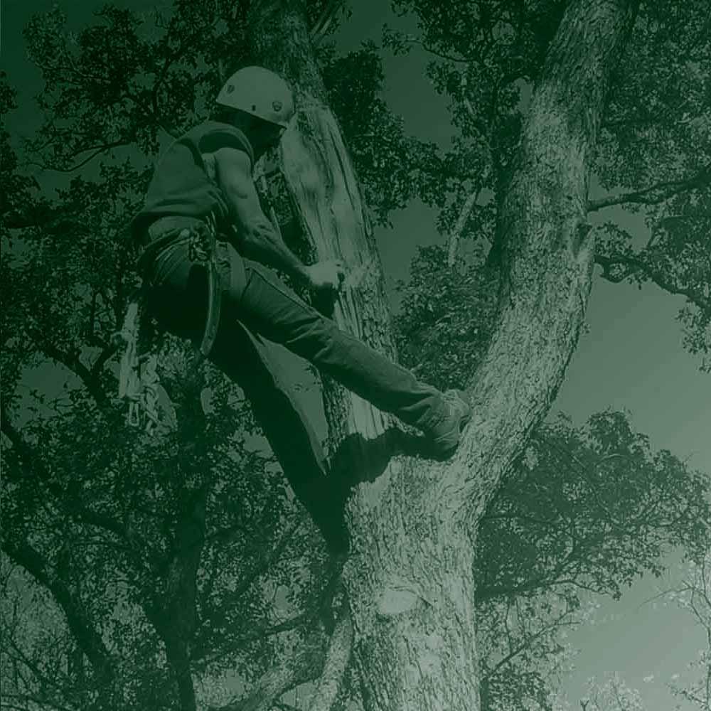 Tree Care London